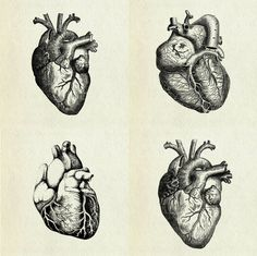 Great illustration of the human heart Herz Tattoo, Kunst Tattoos, Heart Illustration, Medical Illustration, Engraving Illustration, Anatomy Art, Heart Anatomy, Human Anatomy, Anatomy Tattoo