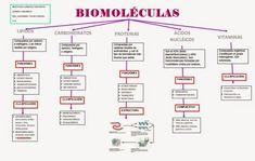 Medicine Notes, Medicine Student, Biochemistry Notes, Study Biology, School Info, Med Student, Stem Projects, Nutrition And Dietetics, Organic Chemistry