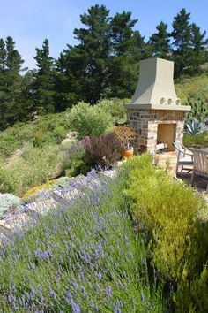 Lavender garden ~ contemporary landscape by Debra Campbell Design