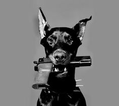 dObErMaN Source by shepherddogy The post dObErMaN appeared first on SH Dogs. Doberman Pinscher Dog, Doberman Dogs, Dobermans, Black Doberman, Animals And Pets, Cute Animals, Mode Poster, Scary Dogs, Bad Girl Aesthetic