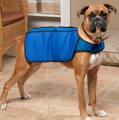 Chilly Vest™ for Dogs. Breathable vest cools your dog during hot months.Includes 4 freezer gel packs that fit into vest pockets.