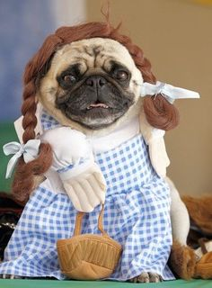 We're off to see the pug! The wonderful pug of Oz! Easy College Halloween Costumes, Cute Couple Halloween Costumes, Pumpkin Halloween Costume, Kids Costumes Boys, Diy Halloween Costumes For Kids, Halloween Makeup, Halloween Decorations, Group Halloween, Halloween Halloween
