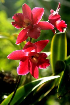 "Exotic & ""Ghost"" Orchids