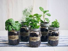 diy mason jar fresh herb garden for the home kitchen idea also a good gifts from the kitchen idea for people who like to cook