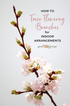 Oct 1, 2020 - Learn tips for cutting, arranging, and forcing flowering branches indoors for quick use in flower arrangements around the house. Types Of Flowers, Cut Flowers, Flower Pot Design, Gardening Tips, Flower Gardening, Indoor Gardening, Organic Gardening, Flower Branch, Garden Projects