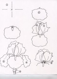 iris by donna debling Flower Line Drawings, Flower Drawing Tutorials, Flower Sketches, Art Drawings Sketches, Art Tutorials, Iris Drawing, Floral Drawing, Iris Painting, Painting & Drawing