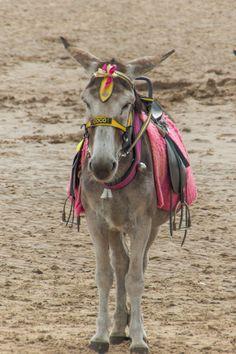 Blackpool Donkey by Gary Chadbond on 500px