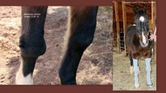 "Really good to hear that Maverick is now in Whinny Warmers. He was found deserted in the desert nearly starved to death. ""Equine WellBeing Rescue Inc., can't thank you enough for making Maverick's life less painful with your generous donation of Whinny Warmers. Please share this photo on your wall and let everyone know that we think you are AWESOME!!!!! Christine Griffin, Pres"""