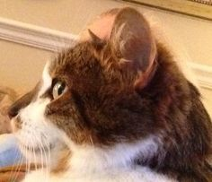 Saying Goodbye To The Cat Who Changed My Life