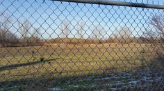 Looking north from the Howard Watson Nature Trail, behind Michael Snow Court.  Heritage Park subdivision, Sarnia, Ontario.  November 25, 2015.