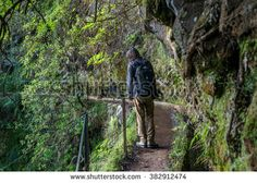 Madeira typical walking and hiking path - Levada. This particular Levada do Furado leads from Ribeiro Frio through lush rain-forest with waterfalls and many beautiful trees. Waterfalls, Lush, Paths, Hiking, Rain, Trees, Stock Photos, Beautiful, Walks