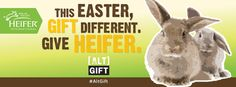 """""""Five Ways to Create Social Change This Easter With Heifer"""""""