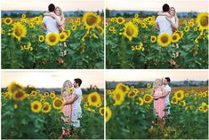 sunflower engagement shoot- so cute to be shoot in Gilliam, La