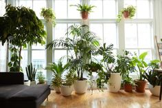 Indoor Gardening 8 Houseplants that Can Survive Urban Apartments, Low Light and Under-Watering - These plants were born to be city dwellers. Cute Apartment, Urban Apartment, Apartment Living, Apartment Therapy, Living Room, Apartment Plants, Apartment Ideas, Air Filtering Plants, Hollywood Hills Homes