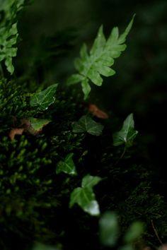 90377:  Green Earth III by Onodriim