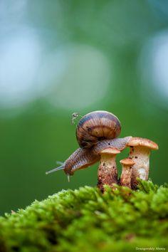 Snail by Alex Drangovsky on 35Photo