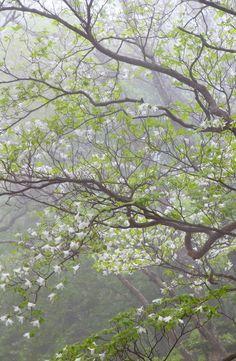 #nature #flora #japan