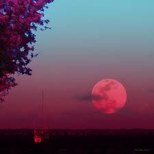 pink moon - Google Search