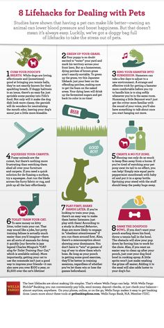8 Lifehacks for Dealing with Pets - pour foamy beer on brown lawn spots to revitalize the grass