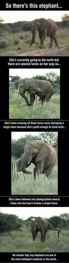 Funny intelligent elephant