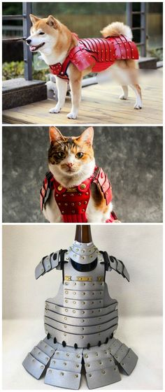 Nothing screams Japan quite like the Samurai Pet Armor for Cats and Dogs, which brings together Japan's history and its love for small domestic animals. Best Dog Costumes, Pet Costumes, Cute Funny Animals, Cute Cats, Cat Armor, Japanese Dogs, Diy Stuffed Animals, Dog Cat, Cosplay
