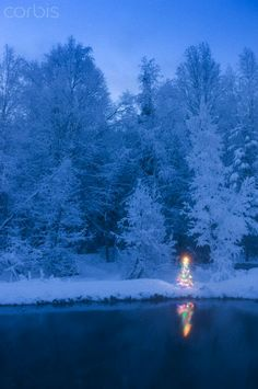 Christmas Tree in Alaska