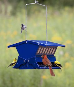 Electric Blue Absolute II - $89.95  Keeps out squirrels -- spring weighted perches do the job! Roof lifts for easy refilling -- 11 x 14 x 9.  Holds 8 lbs. of seed.