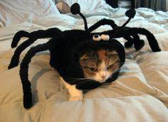 Cat n Spider!