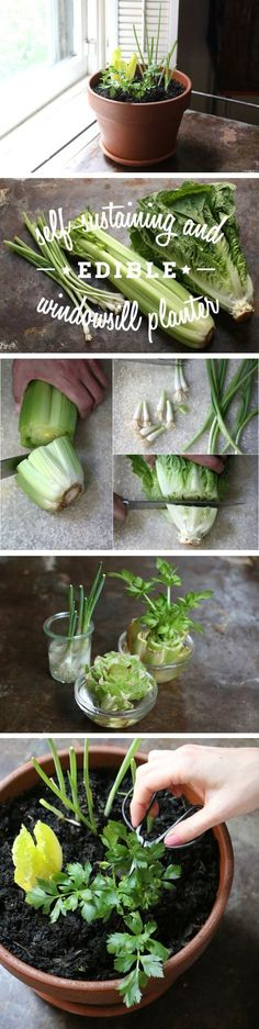 Plant your edible goodies in a window planter, and you can snip off what you need for salads and cooking and then watch them magically regrow. http://www.ehow.com/?utm_content=buffer31619&utm_medium=social&utm_source=pinterest.com&utm_campaign=buffer...