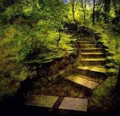 forest stairs - Buscar con Google