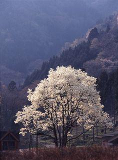 "miizukizu: ""By : わかちゃん (Do not remove credits) "" Great Love, Vivid Colors, Waterfall, Country Roads, Earth, Leaves, Trees Beautiful, Drawings, Photography"