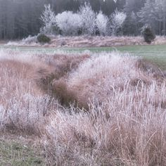 Waiting for snow Weed, Frost, Waiting, Country Roads, Outdoors, Snow, Image, Marijuana Plants, Outdoor Rooms