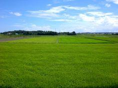 菰野町川北地区 北海道を思わせる風景  平成24年8月5日撮影