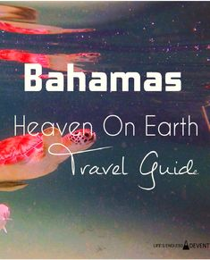 bahamas travel guideI don't have to tell you that the Bahamas is an AMAZING place to visit, I'm sure you already know. But I will show you some cool things to do and pictures that will make you want to book a ticket right now. Most of these things are from Green Turtle Cay, a smaller island of the Bahamas.