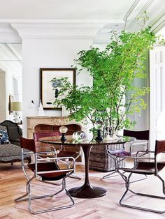to Decorate With Large Indoor Plants in Every Home Dining room with sleek décor and a large indoor plantDining room with sleek décor and a large indoor plant Masculine Home Decor, Masculine Apartment, Masculine Style, Large Indoor Plants, Indoor Trees, Big Plants, Green Plants, Potted Plants, Interior Inspiration