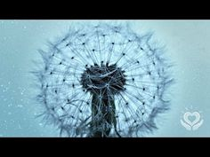 (10) Reiki for Letting Go   Releasing   Release and Let Go   Energy Healing - YouTube