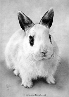 Bunny by ~balloonfactory on deviantART Pencil Drawings Of Animals, Realistic Pencil Drawings, Amazing Drawings, My Drawings, Drawing Animals, Graphite Drawings, All Animals Photos, Rabbit Colors, Bunny Drawing