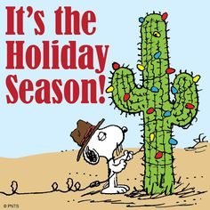 It's the Holiday Season! Snoopy decorates a Cactus for Christmas. Peanuts Christmas, Tacky Christmas, Charlie Brown Christmas, Charlie Brown And Snoopy, Christmas Lights, Merry Christmas, Cowboy Christmas, Christmas Graphics, Christmas Countdown
