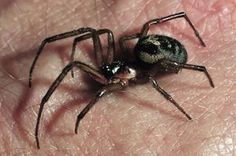 Check out the top poisonous spiders