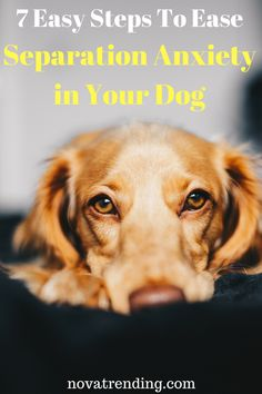 Dog training will be easier if you understand how your dog thinks. If your dog doesn't listen, check out this article on dog psychology that will help train any dog. Dog Separation Anxiety, Dog Anxiety, Anxiety Tips, Dog Training Classes, Dog Training Tips, Training School, Training Schedule, Dog Psychology, Dog Health Tips