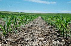 Hranirea solului: o introducere la metoda de gradinarit fara lucrarea in profunzime a solului