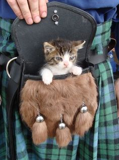Kitten in a Sporran (Scottish purse for kilt). Traditionally, the Scotts used the Sporran in battle to carry up to three kittens, as backup ...