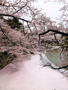 Sea of Blossom by Joseph Tame via ethertune