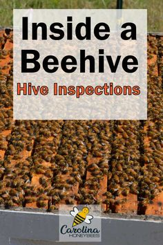 What to look for inside a beehive during rountine beehive inspections. What to watch for and correct before the problem causes harm to your bees. Honey Bee Hives, Honey Bees, Harvesting Honey, Rainwater Harvesting, Bee Facts, Bee Hive Plans, Beekeeping For Beginners, Buzzy Bee, Bee Boxes
