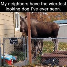 25 Funny Animal Pictures for Your Thursday
