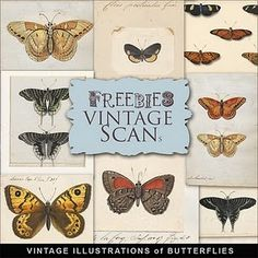 Freebies Vintage Butterflies Illustrations