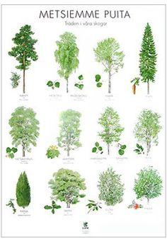 Teaching Geography, Teaching Biology, Finnish Language, Maila, Nature Journal, Environmental Science, Nature Crafts, Walking In Nature, Land Art
