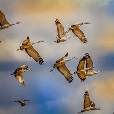 7 Surprises from the Christmas Bird Count | Audubon  Illinois: Counters crane their necks for a parade of migrants.