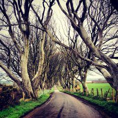 Dark Hedges, Antrim Ireland
