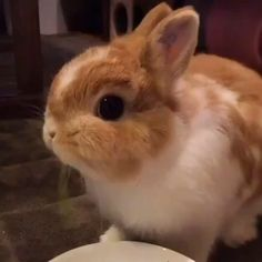 Just a Bunny Eating Lunch – Jule - Baby Animals Baby Animals Super Cute, Cute Baby Bunnies, Cute Little Animals, Cute Funny Animals, Funny Bunnies, Cute Bunny Pictures, Baby Animals Pictures, Dwarf Bunnies, Pet Bunny Rabbits